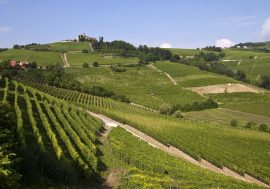 Tasting Tour – Langhe and Monferrato