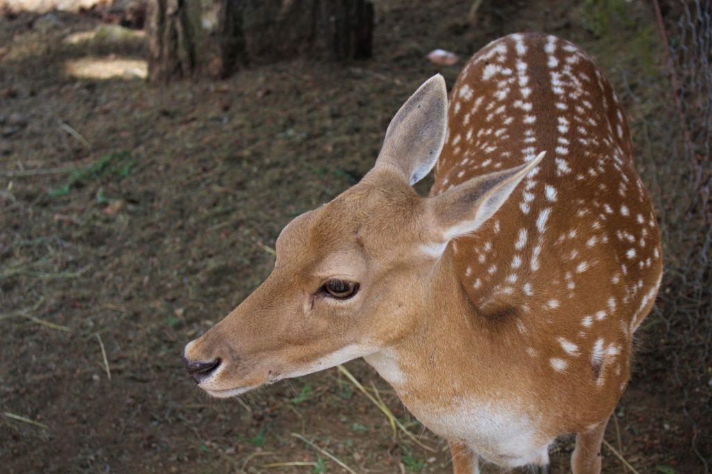 parco-nazionale-sila-riserva