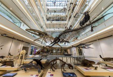 MUSE, il Museo delle Scienze di Trento