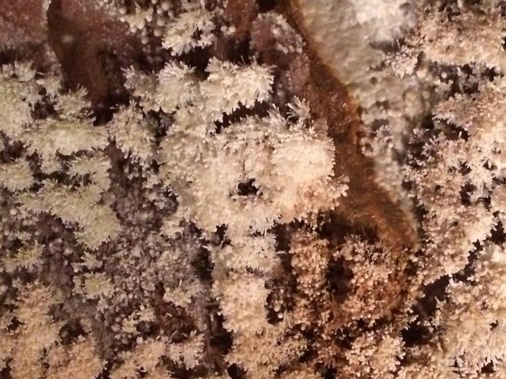 cristalli-grotte-liguria-toirano