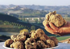 Truffle Hunting in the Hills of Tuscany