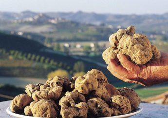 Truffle Hunting in Tuscany: San Miniato and Volterra
