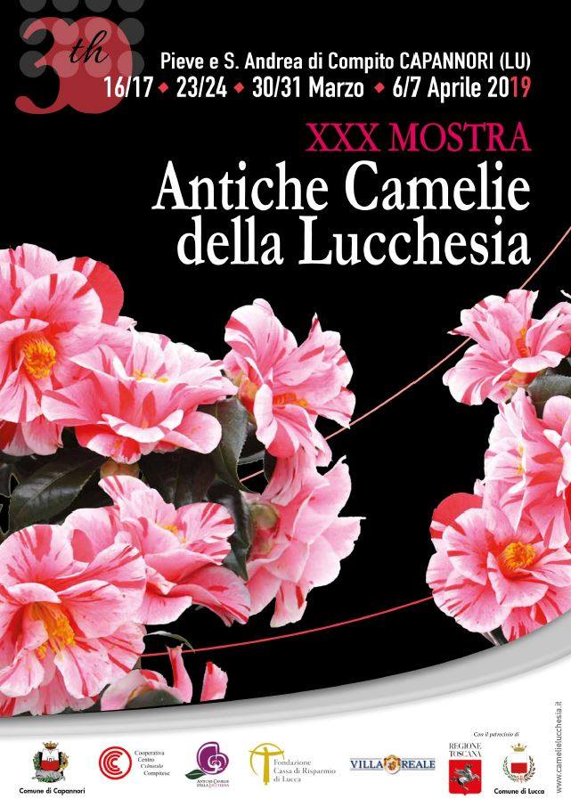 antiche-camelie-lucchesia-2019