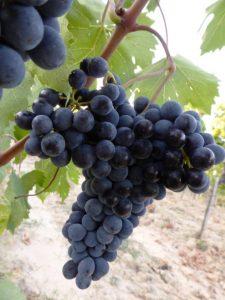 orcia-wine-festival-san-giovese