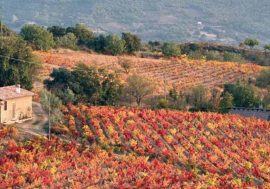 In the Heart of Sardinia: Autumn in Barbagia 2018