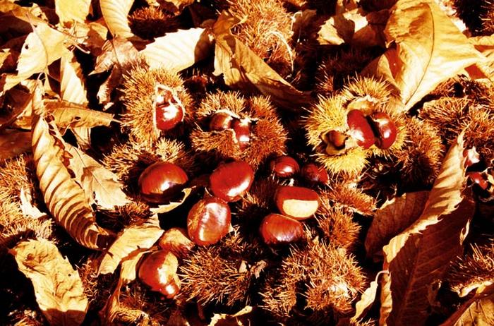 chestnut-festival-in-palazzuolo-sul-senio