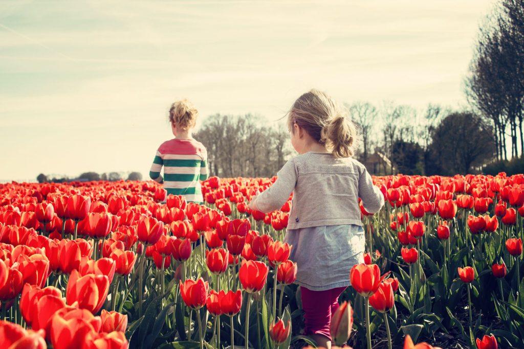 sardegna-turri-tulipani