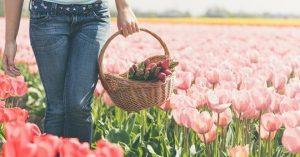 tulipani-2019-sardegna-evento