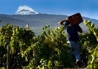 Sicilian Wines- First Edition of Etna Torre Wine