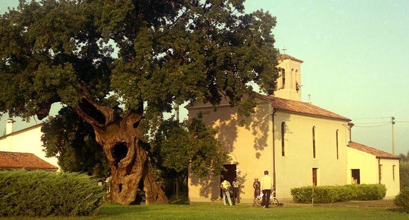 alberi-giganti-italia-dooid