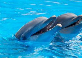 Zoomarine: Italy's Marine Mammal Theme Park in Rome