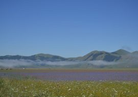 Umbria in Bloom: the Flower Fields of Castelluccio di Norcia