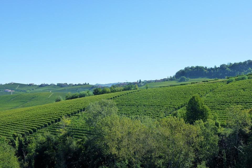 barolo-vigne-cappella