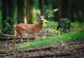 Visitare la Riserva Naturale di Monte Rufeno a Viterbo