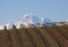 Wine Tasting in Abruzzo's Teramo Province