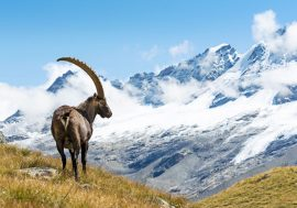 Il Primo Parco Nazionale in Italia, il Gran Paradiso