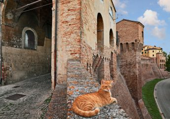 A Guide to the City of Jesi in the Marches Region